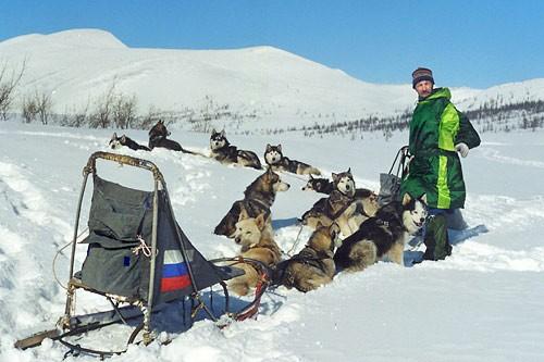Dog-team-15