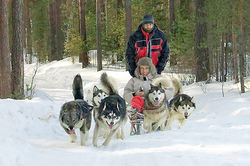 Dog sledge tour
